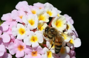 Picture from: http://www.treehugger.com/natural-sciences/the-latest-buzz-on-disappearing-honey-bees-some-improvement.html